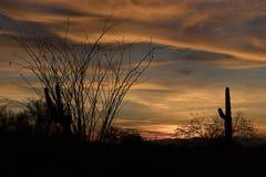Sonoran ökensolnedgång med Ocotillokaktuns Royaltyfri Foto
