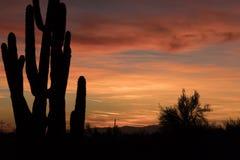 Sonoran ökensolnedgång med Saguarokaktuns Arkivfoton