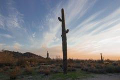 Sonoran Dawn royalty free stock photos