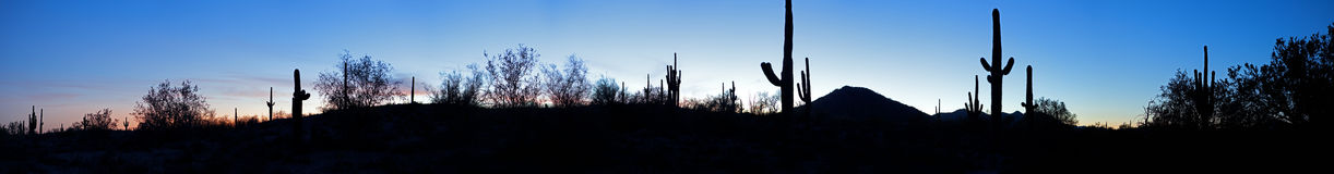 Sonoran Desert. Saguaro silhouetten in Sonoran Desert at sunset royalty free stock photo