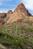 Sonoran Desert. Saguaros and Buttes in Sonoran Desert, on Apache Trail Stock Image