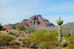 Sonoran Desert. An image of Sonoran Desert with a Seguaro cactus Stock Images