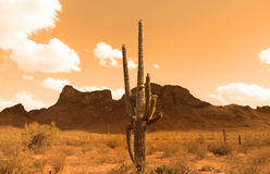 Sonoran Desert Stock Photo