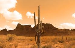 Sonoran Desert. Wild west concept with Sonoran desert in sepia color stock photo