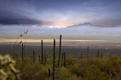 Sonoran desert Royalty Free Stock Photo