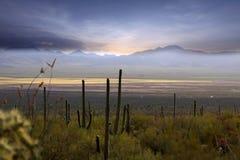 Sonoran desert. Saguaro national park in Sonoran desert royalty free stock photo