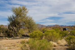 Sonoran desert. Landscape of Sonoran desert with off-road vehicle in background Stock Photos