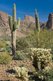 Sonoran Desert. The Superstition Mountains of central Arizona rise above a lush and healthy sonoran desert Stock Photo