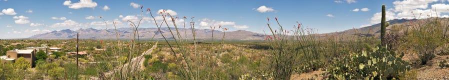 Sonoran Desert Royalty Free Stock Photo
