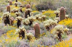 Sonoran Desert in Bloom. Springtime scene in the Sonoran desert with blooming wildflowers and various species of cacti. McDowell Sonoran Preserve in Scottsdale stock image