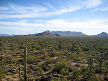Sonoran Desert with Cati. Landscape of the Sonoran Desert near Phoenix with Saguaro Cacti stock photo