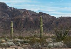 Sonoran Desert, classic scene. The Sonoran Desert in central Arizona shows off Saguaro cactus, Ocotillo and creosote stock photos