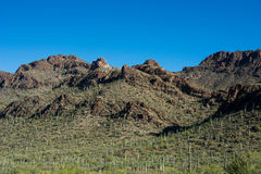 Sonoran Desert. Early morning near Tucson Arizona royalty free stock images