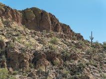 Sonoran Desert hillside. Classic Sonoran Desert scenery, Saguaro Cactus stock photos