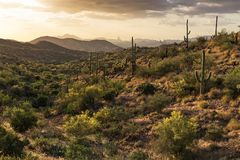 Sonoran Desert. Landscape with mountains and Saguaro Cactus Stock Photo