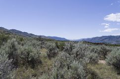 Sonoran Desert Landscape with Osoyoos Lake in the distant backgr. Desert landscape with  Lake Osoyoos in the background royalty free stock photo
