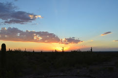 Saguaro cactus in desert landscape sunset. Sonoran desert landscape at sunset with multi-color clouds and sky Royalty Free Stock Images