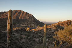 Sonoran desert, mountains, and road. Sonoran desert at dawn with mountains and road Royalty Free Stock Image