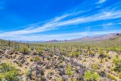 Sonoran Desert Stock Photos