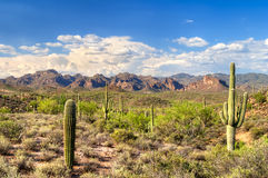 Sonoran Desert. Saguaros in Hewitt Canyon, Arizona royalty free stock photography