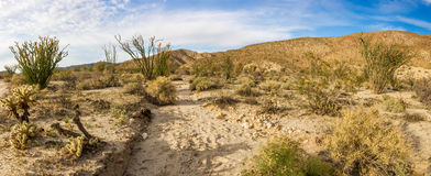 Sonoran Desert Scene. Panoramic Composition Of Sonoran Desert Scene With Dry Wash, Anza-Borrego Desert State Park, California Stock Image