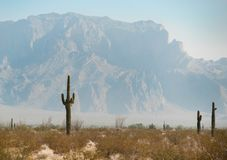 Sonoran Desert. The Sonoran Desert in the Southwest USA Royalty Free Stock Images
