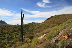 Sonoran desert spring Stock Images