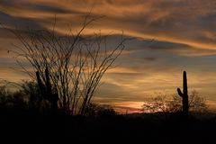 Sonoran Desert Sunset with Ocotillo Cactus. Silhouetted against a golden sky royalty free stock photo