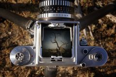 Sonoran desert in viewfinder. Middle forman camera set up for landscape shoot Royalty Free Stock Images