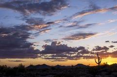 Sonoran inställning Royaltyfri Fotografi