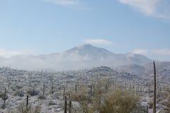 Sonoran più freddo Fotografie Stock Libere da Diritti