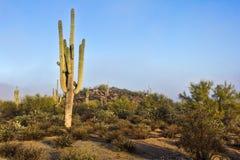 sonoran saguaro ερήμων κάκτων Στοκ φωτογραφίες με δικαίωμα ελεύθερης χρήσης