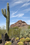 Sonoran Sentinel Royalty Free Stock Photo