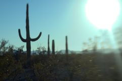 Sonoran Sun Stock Images