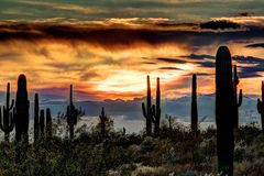 Sonoran Sunset. The sun setting on the Sonoran desert with cactus Royalty Free Stock Image