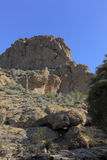 Sonoran Upland Natural Area royalty free stock photography