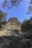 Sonoran Upland Natural Area. Cacti and other desert succulent plants near Magma ridge in Boyce Thompson Arboretum State Park near city of Superior; AZ. Shot thru stock photos
