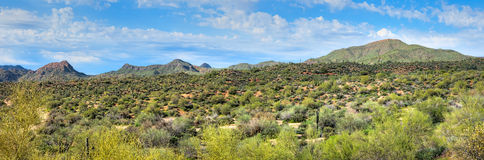 Sonoran Wüste stockfotografie