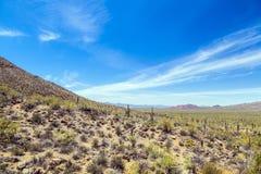 Sonoran Wüste stockfoto