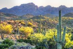 Sonoran Wüste lizenzfreies stockbild