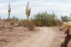 Sonoranwoestijn die/wandelingsweg lopen stock afbeelding