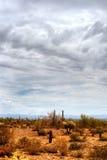 Sonorawoestijn Stock Afbeeldingen
