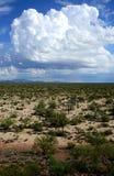 Sonorawoestijn Arizona royalty-vrije stock foto