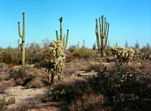 Sonorawoestijn Arizona royalty-vrije stock afbeelding