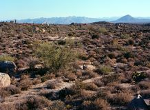 Sonorawoestijn Arizona stock fotografie