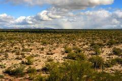 Sonorawoestijn Arizona Stock Afbeeldingen