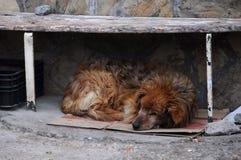 Sonos do cão disperso sob o banco imagem de stock
