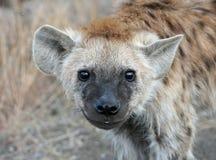 Sonrisa de Cub del Hyena Imágenes de archivo libres de regalías