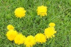 Sonrisa de dientes de león en hierba verde Foto de archivo libre de regalías
