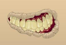 Sonrisa de un zombi ilustración del vector